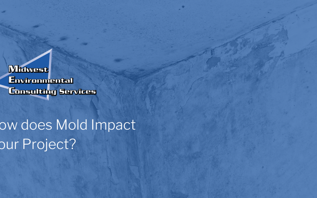 How would mold impact my project?